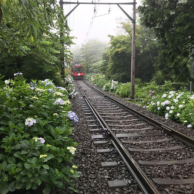 雨がしっかり降った後は美しい茜雲!夏至の贈り物です!#箱根登山鉄道#あじさい電車#夏至#茜雲#夏至