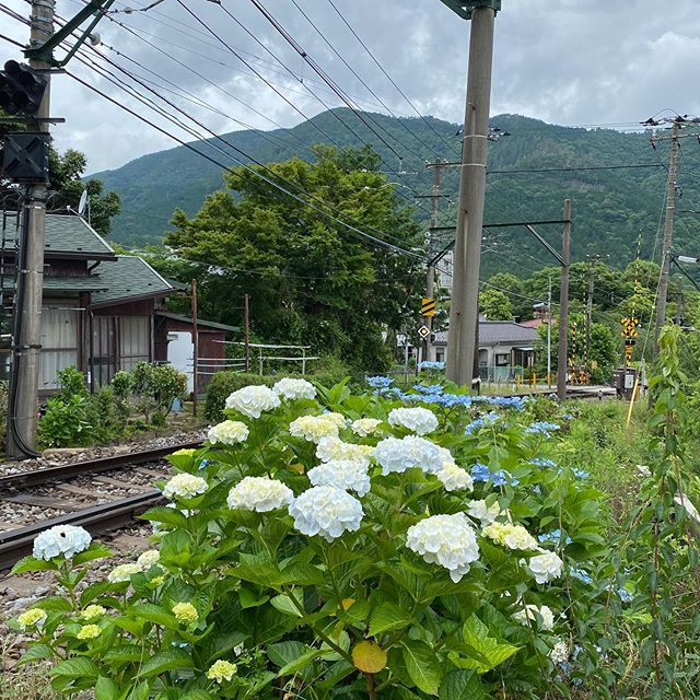 6月も半ばになりました。箱根登山鉄道沿線のあじさいも色付き始めました。赤い電車とあじさいを見れるようになったのは、本当に感謝です!何十年も変わらぬ風景!これからもずっと見たい風景!です!敷地のいちごやトマトも順調に育っています!自然は何があっても変わらない営みです!#箱根登山鉄道#あじさい電車#試運転#箱根#箱根登山鉄道