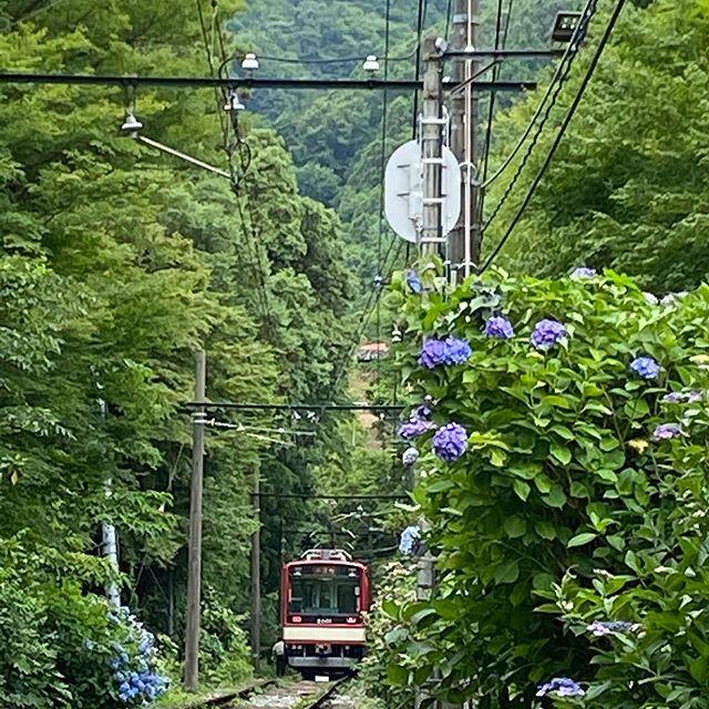 登山鉄道の再開日が決まり試運転の走りも一層力が入っているように思えます。箱根はいろいろな観光資源に恵まれているのですが、やはり登山電車は格別だと思います!人を乗せて走る姿がもう少しで見られます❣️#箱根登山鉄道#あじさい#大平台#試運転
